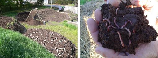 compost-da-giardino-e-lombrichi-blog-paolopistis