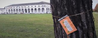 Festa albero Limena 2019