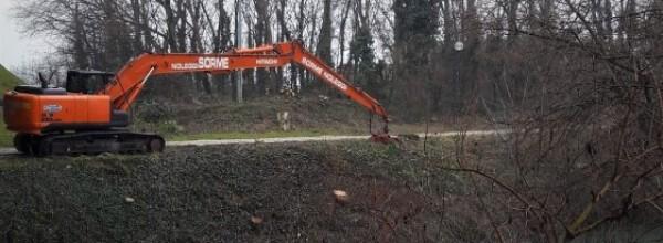Ancora tagli di alberi lungo i corsi d'acqua del Brenta