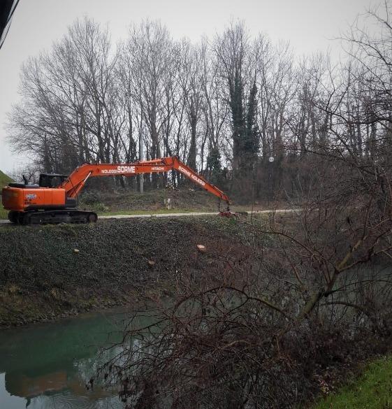 Tagli alberi Brentella 2021